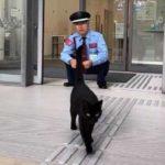 尾道市立美術館の猫と警備員2019年夏!まだまだ続く攻防